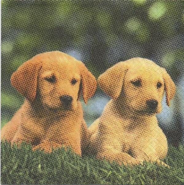 2 petits chiens serviette papier