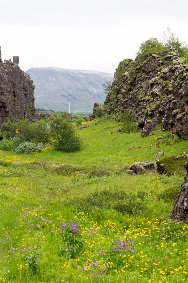 Dream destination: Iceland and it's flower fields | 40plusstyle.com
