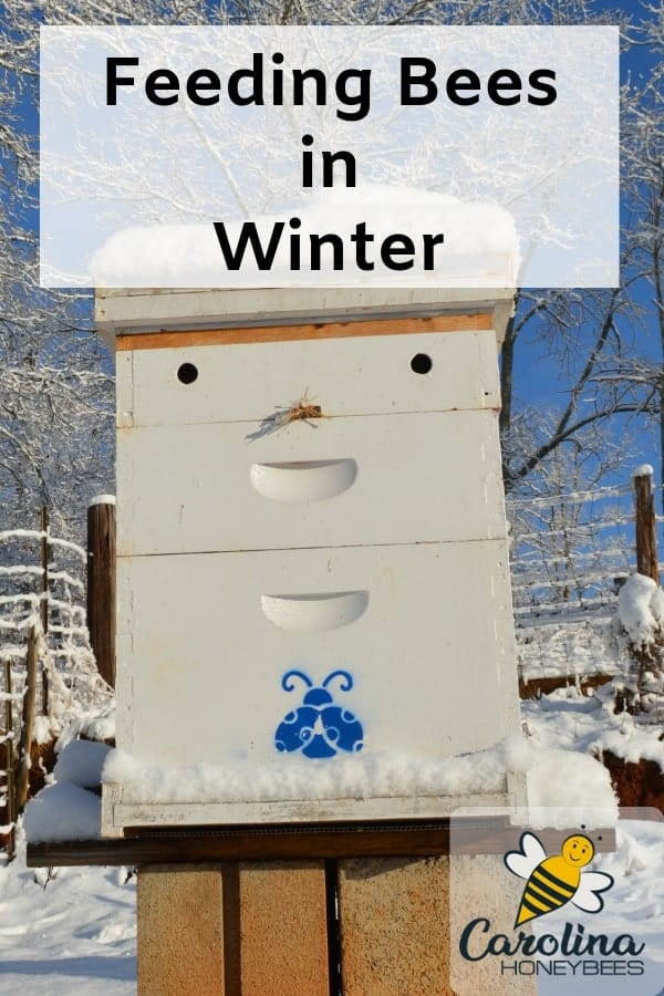 beehive in snow - feeding bees in winter cold can be a necessity