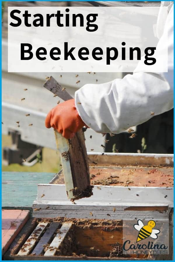 Beekeeper with honey frame - starting beekeeping is a great way to produce your own honey