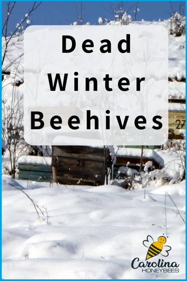 Beehives in snow. Finding dead winter beehives is difficult for beekeepers to understand