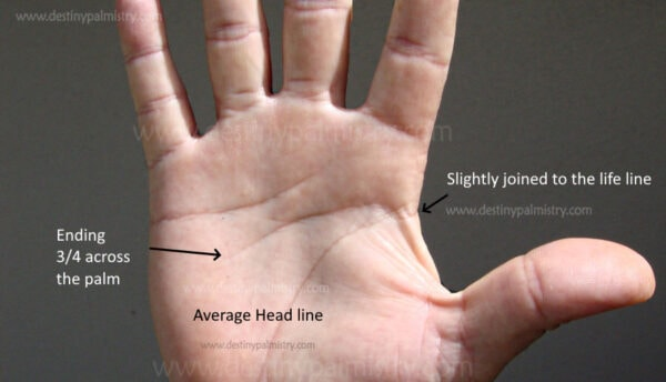 normal head line on the palm