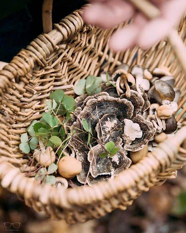 Foraging and Feast in London