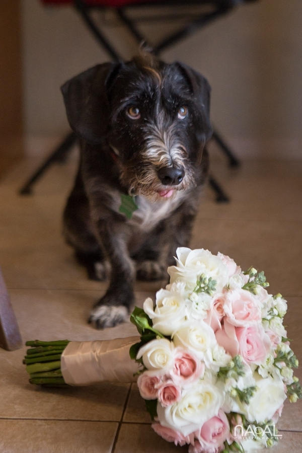 Dogs at weddings. Villa Sol y Luna, Mexico by Naal Wedding Photography