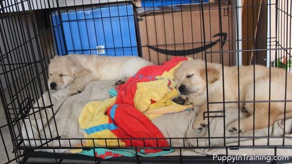 Puppy Crate Training 101?