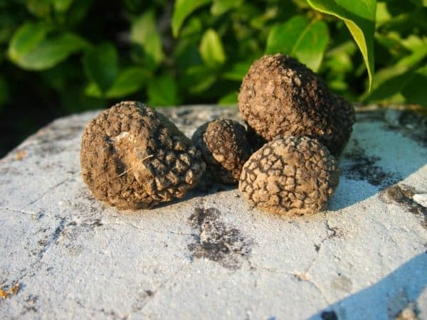 Black truffles from Umbria, Italy. We found these!