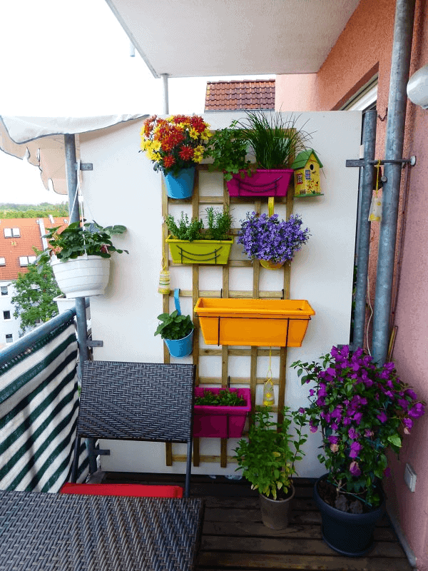 Mini vertical garden plants