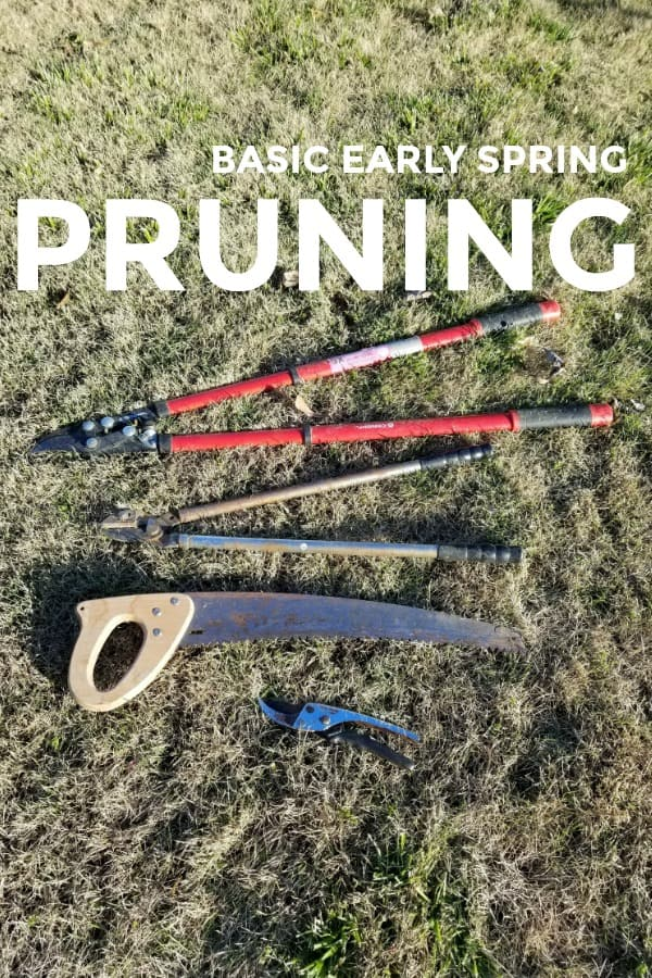 Basic Early Spring Pruning Pruners lying on the ground