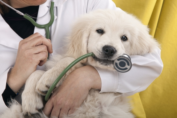 Veterinary Catheters