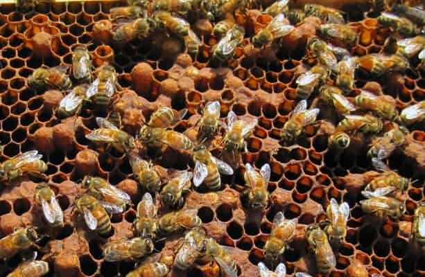 Bee hive inspection videos and pictures help to diagnose hive health.