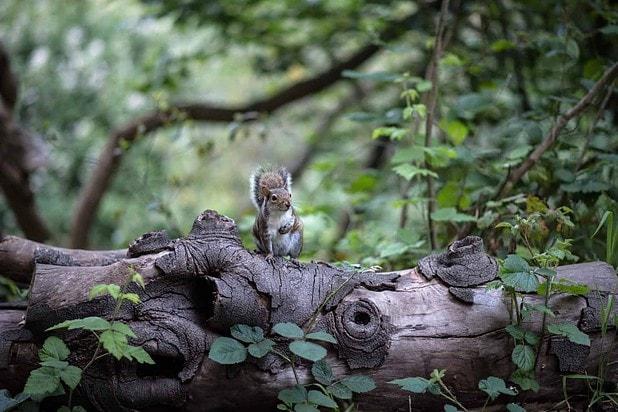 Hunt Small Animals