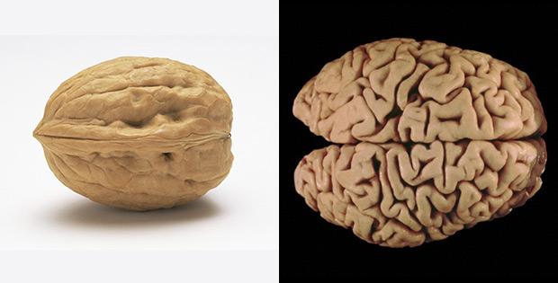 Walnuts improve brain work