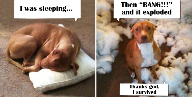 """I was sleeping... And then it """"BAANNNGGG!!!!"""" The pillow exploded. Thanks god, I survived..."""