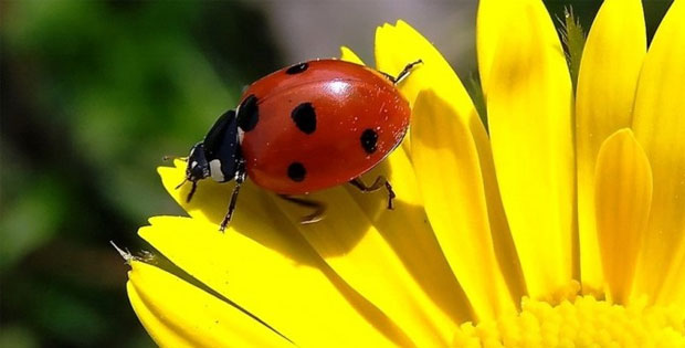 Oriental wisdom about a small bug