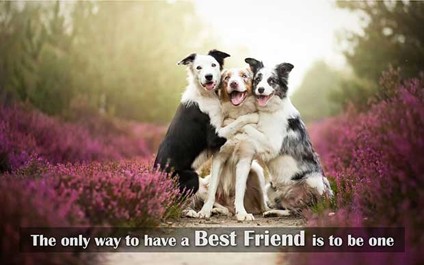 best_friends_quotes_10pr