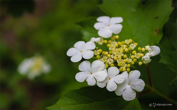wild_field_flowers_HD_1920x1200_05pr