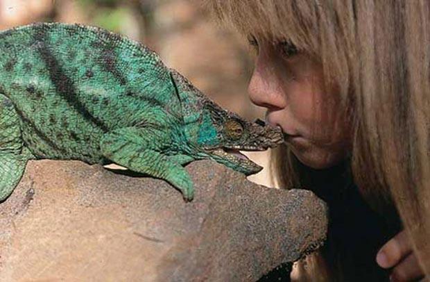 Little Tippi Degré and a chameleon