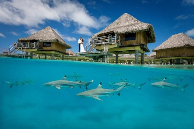 Bride and groom posing with sharks in the lagoon of Bora Bora