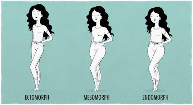 Девушка мезоморф и эктоморф эндоморф