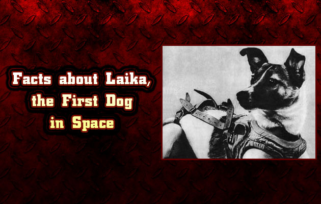 Photo of Facts about Laika, the First Dog in Space