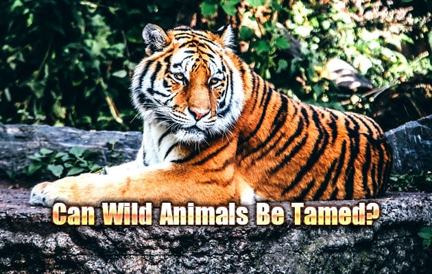 Photo of Can Wild Animals Be Tamed?
