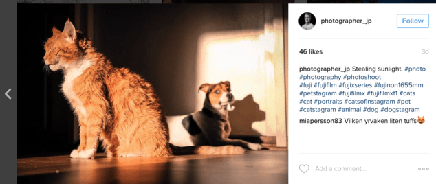 cat and dog hashtags