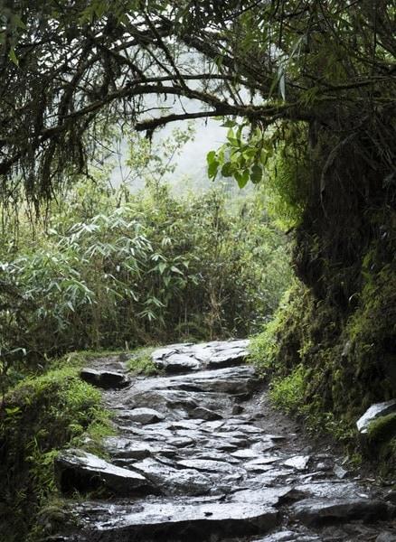 マチュピチュ遺跡のインカ道(トレイル)