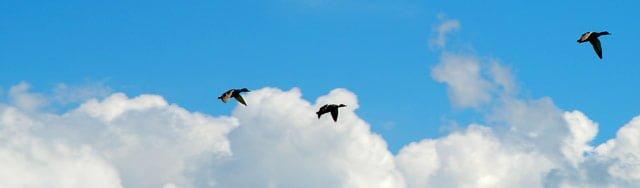 ציפורים עפות בשמים
