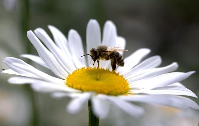 Álombeli méh, mell, mén, menny, mennyország