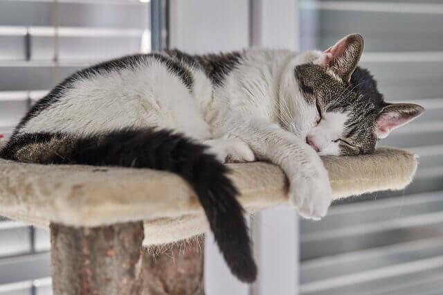 sieste sur un arbre à chat