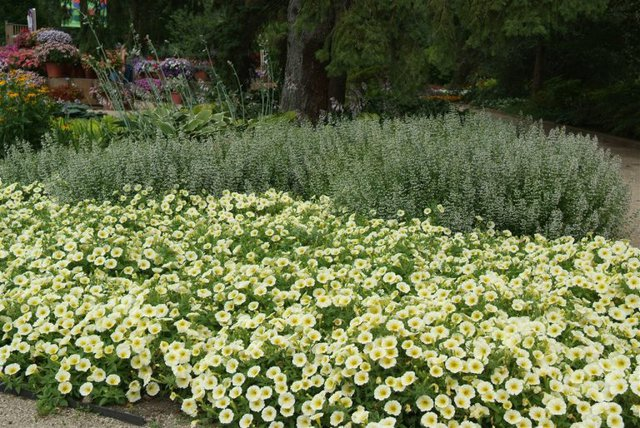 Planting petunias and pansies brighten your space