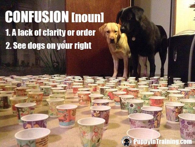 Dog Confusion