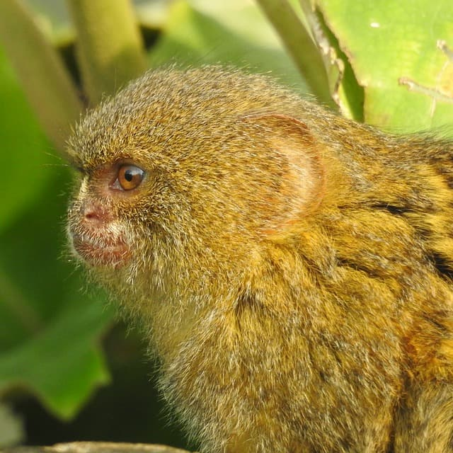 Cute Small Monkey Breeds
