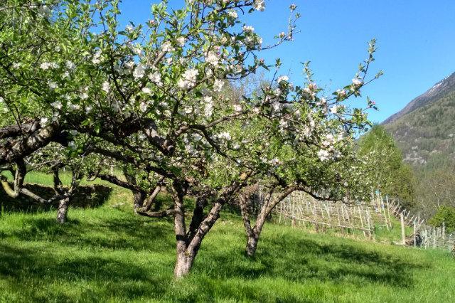 Frutteto-i-migliori-libri-per-la-cura-degli-alberi-da-frutto