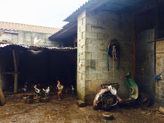 where to go in sardinia sardara roosters