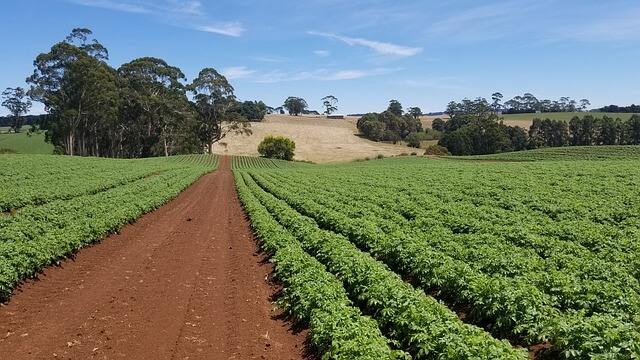 farms australia where to find regional work in Australia (1)