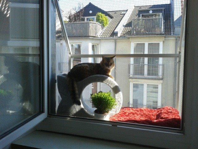 Fenster katzensicher