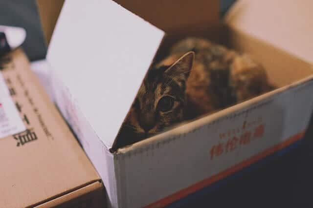 carton chat
