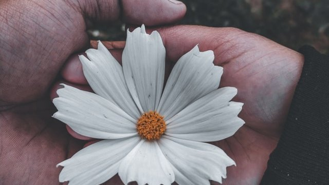 photo-of-person-holding-white-flower-4111719