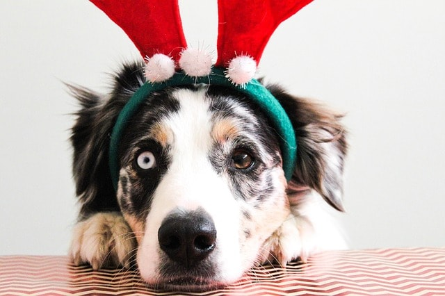 Natal Pet