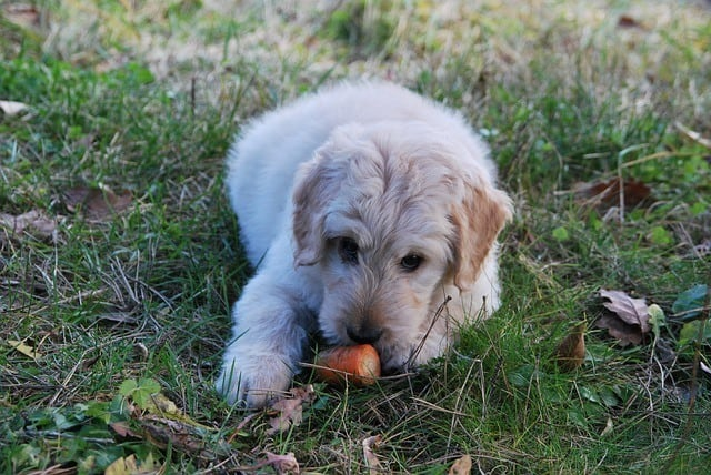 dog eat carrot which turns poop orange is this bad
