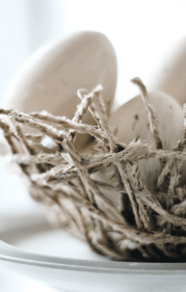 Detail of nest with egg in it