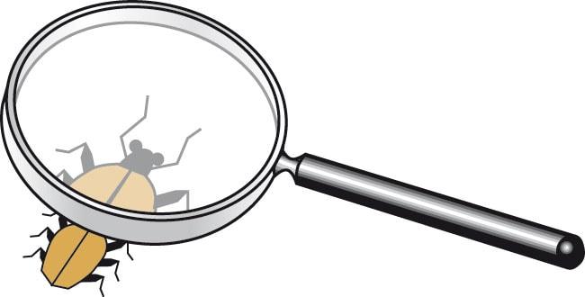 Illustration - Käfer unter der Lupe