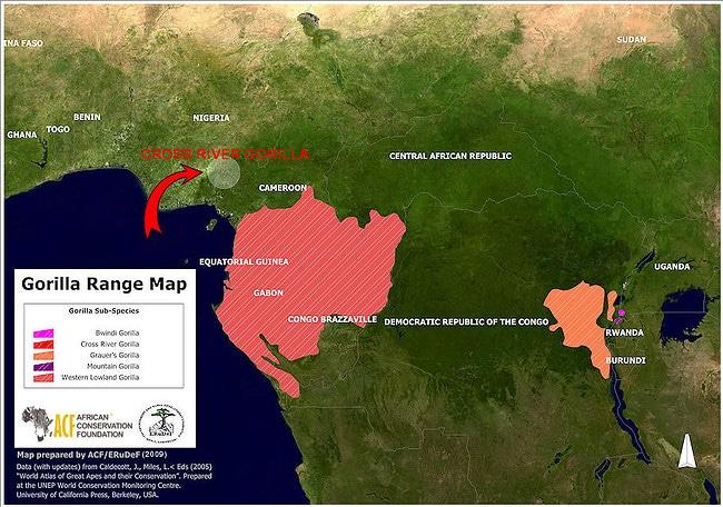 Gorilla Ranges in Africa - Map