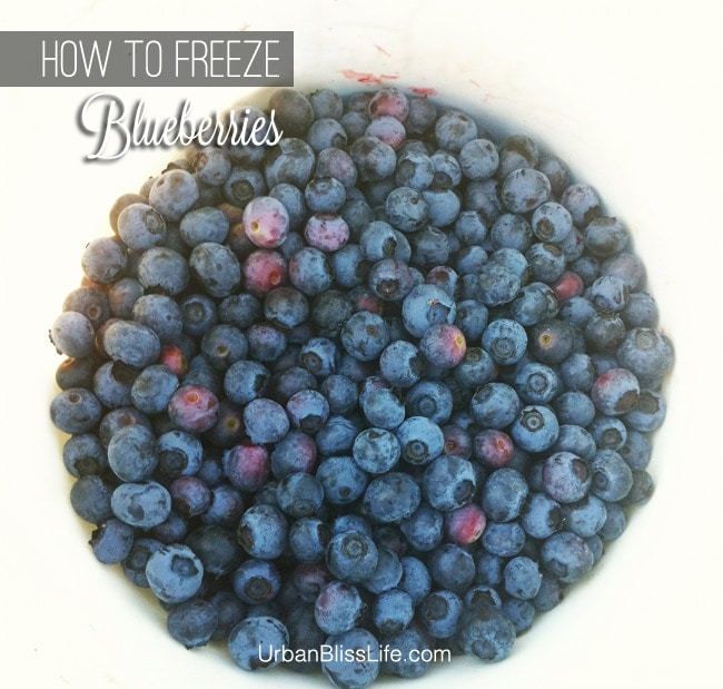 How to Freeze Blueberries 01
