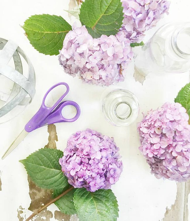 how to decorate with hydrangeas