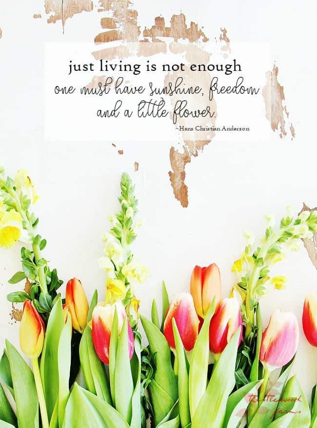 just living is not enough one must have sunshine freedom and a little flower
