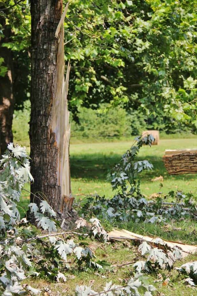 A fallen tree in your backyard is a moment full of creative opportunity.