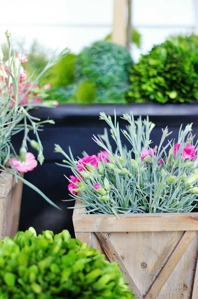 spring flower planters