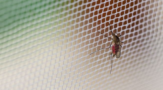 The best plan for home mosquito control